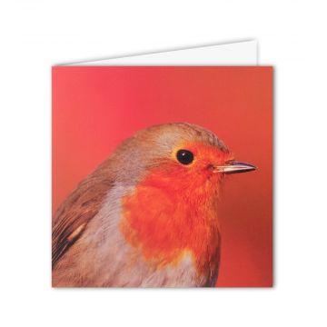 Robin Redbreast Greeting Card