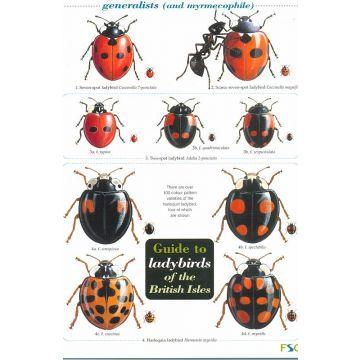 ID Chart - Ladybirds
