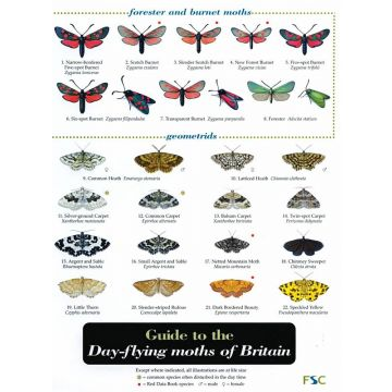 ID Chart - Guide to the Day-flying Moths of Britain
