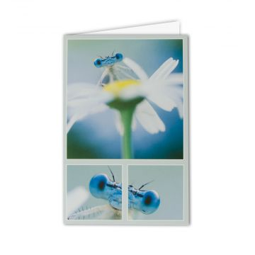White-legged Damselfly Greeting Card