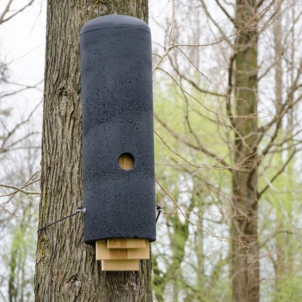 A bat box on a tree