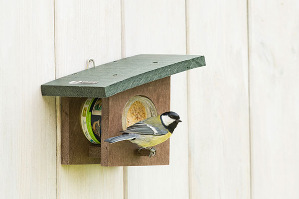 New to Bird Feeding