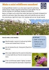 Make a Mini Wildflower Meadow