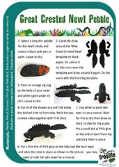 Pebble Great Crested Newt