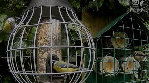 Bird Feeder Webcam