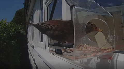 Window Feeder Webcam